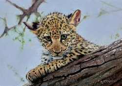 Curious by Pip McGarry - Original Painting on Stretched Canvas sized 14x10 inches. Available from Whitewall Galleries